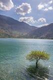 Isolerat träd i sötvatten sjön mellan berg fotografering för bildbyråer