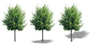Isolerat träd med skuggor Royaltyfria Foton