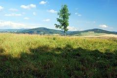 Isolerat träd på äng Royaltyfri Foto