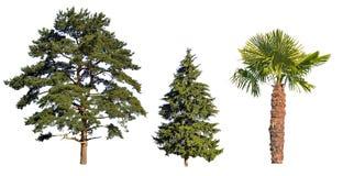 isolerat tre vita trees Royaltyfri Foto
