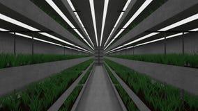 Isolerat underjordiskt växthus stock video