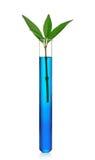 isolerat växtprovrör Arkivfoto