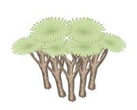 Isométrique de Dragon Tree sur le fond blanc illustration de vecteur