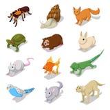 Isometric κατοικίδια ζώα κατοικίδιων ζώων με τη γάτα, το σκυλί, τη χάμστερ και το κουνέλι Στοκ Εικόνες