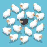 Isometric black sheep in the flock Royalty Free Stock Photo