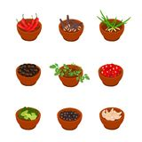Isometric and cartoon style flavorful spices, condiments icon. Vector illustration. White background. Stock Photo