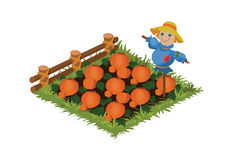 Isometric Cartoon Vegetable Garden Bed with Funny Scarecrow Planted with Pumpkins Royalty Free Stock Images