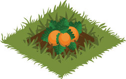 Isometric Cartoon Vegetable Garden Bed Planted with Pumpkin - Elements for Tileset Map Royalty Free Stock Photography
