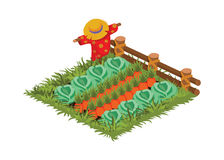 Isometric Cartoon Vegetable Garden Bed with Scarecrow Planted with Cabbage and Carrot Royalty Free Stock Photo