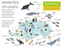 Isometric 3d Antarctica flora and fauna map elements. Animals, b stock illustration