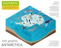 Isometric 3d Antarctica flora and fauna map elements. Animals, b Royalty Free Stock Image