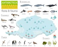 Isometric 3d Antarctica flora and fauna map elements. Animals, b. Irds and sea life. Build your own geography infographics collection. Vector illustration royalty free illustration