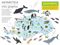 Isometric 3d Antarctica flora and fauna map elements. Animals, b. Irds and sea life. Build your own geography infographics collection. Vector illustration Stock Photography