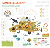Isometric 3d North America flora and fauna map elements. Animals. Birds and sea life. Build your own geography infographics collection. Vector illustration Stock Image