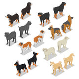 Isometric Dog Breeds with Rottweiler, Retriever and Doberman. Vector flat 3d illustration royalty free illustration