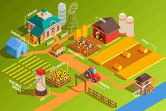 Isometric Farm Infographics. Colorful farm isometric infographics with rural buildings agricultural machinery garden and domestic animals 3d vector illustration Royalty Free Stock Photos