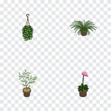 Isometric Flower Set Of Fern, Blossom, Grower And Other Vector Objects. Also Includes Flowerpot, Flower, Blossom Elements. Royalty Free Stock Photo