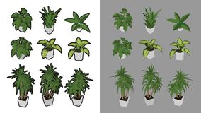 9 Isometric houseplants with and without black outline. 3D iso perspective Stock Photos