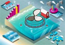 Isometric Infographic of Breeding Oysters Royalty Free Stock Image