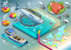 Isometric Infographic of Tuna Breeding. Fish Industry Breeding - Isometric Infographic Tuna Farming stock illustration