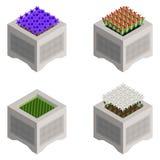 Isometric kwiatów łóżka z jaskrawymi kolorami ilustracji
