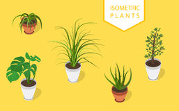 Isometric plant in modern pot small set. Fresh green herbs. Stock Image