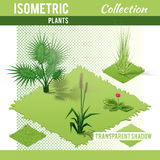 Isometric plants collection Royalty Free Stock Photo