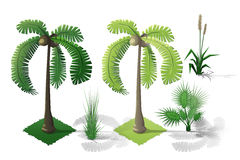Isometric plants forest collection set. Fall trees. Stock Photography