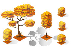 Isometric plants forest collection set. Fall trees and stones. Stock Image