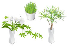 Isometric plants in modern vase and pot Stock Photography