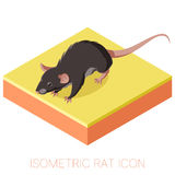 Isometric Rat Icon On A Square Ground Royalty Free Stock Photos
