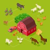 Isometric rolny wektorowy pojęcie Bydlę, rolni ptaki, stajni 3d ilustracja royalty ilustracja