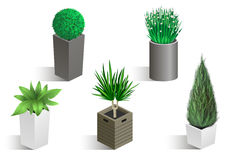 Isometric set of different plants. In pots. Vector graphics Stock Photography