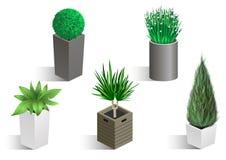 Isometric set różne rośliny Fotografia Stock