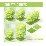 Isometric Trees  003. Isometric Tree  with transparent shadow for landscape design Royalty Free Stock Photo