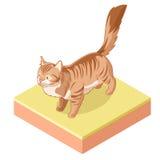 Isometric trwanie kot ikona Obraz Royalty Free