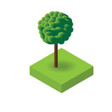 Isometric Vector  summer tree for design. Vector Stock Photography