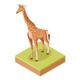 Isometric żyrafy ikona Fotografia Royalty Free
