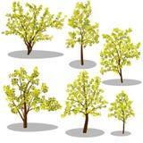 Isometrische Bäume des Vektors und dekorative Büsche stock abbildung