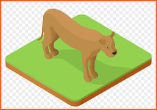 Isometrische leeuwinvector Royalty-vrije Stock Foto's
