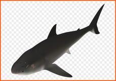 Isometrischer Vektor des Haifischs Lizenzfreies Stockfoto