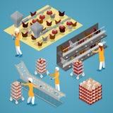 Isometrisches Hühnerbauernhof-Geflügel Bio-Ei-Fertigungsstraße lizenzfreie abbildung