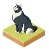 Isometrisk päls- katt Royaltyfria Bilder