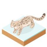 Isometrisk snöleopard Arkivbild