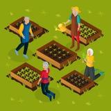 Isometriska pensionärer som arbetar i trädgårds- mall royaltyfri illustrationer