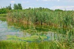 isonzo lub isonzo 9 przyrody rezerwata mokradła Zdjęcie Stock