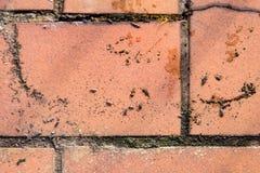 Isopods på bruna tegelstenar Arkivbild