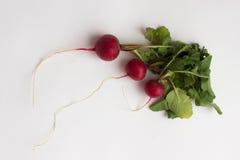 Isotaed nya röda rädisor med grönska Arkivbilder