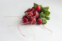 Isotaed nya röda rädisor med grönska Royaltyfria Bilder