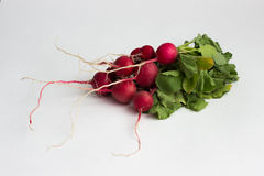 Isotaed nya röda rädisor med grönska Royaltyfri Fotografi